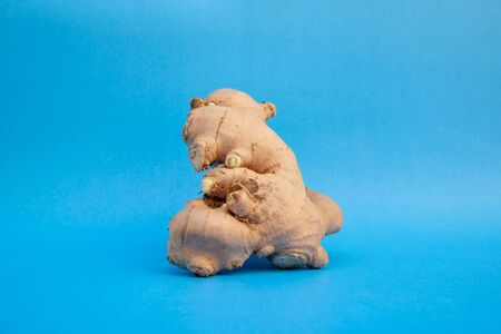 Ginger fresh on blue background. concept healthy spice diet. Banque d'images