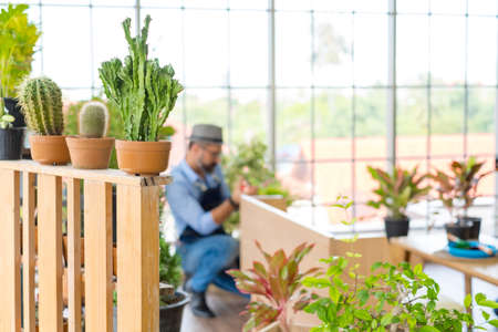 Plant pot, An elderly man handsome have mustache wearing glasses is happy with tree care and decoration. It is a hobby of home gardening, living happily after retirement.