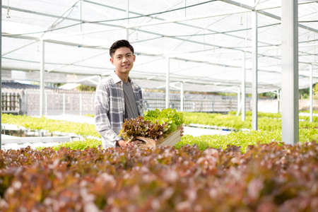 Hydroponics, Asian man holding vegetable basket standing on a farm, growing commercial organic vegetables, small business entrepreneurs. Organic vegetables growing concept.