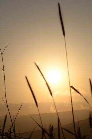 Fili di Erba al tramonto Con colline Foto de archivo