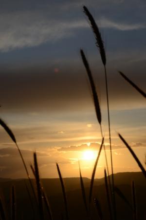Fili di erba al tramonto - 3