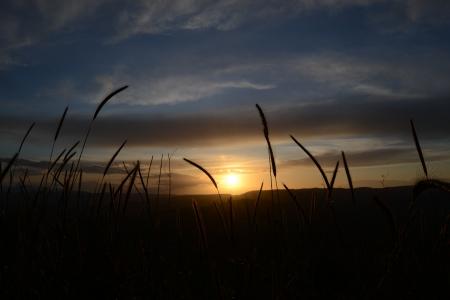 Fili di erba al tramonto - 4
