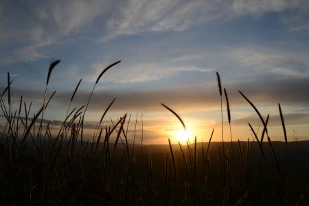 Fili di erba al tramonto - 5