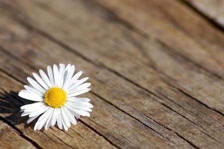 Margherita su tavolo di legno