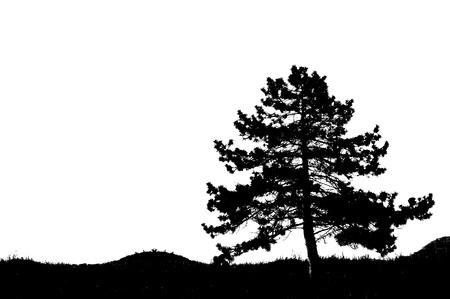 albero: Siluette di un albero di pino