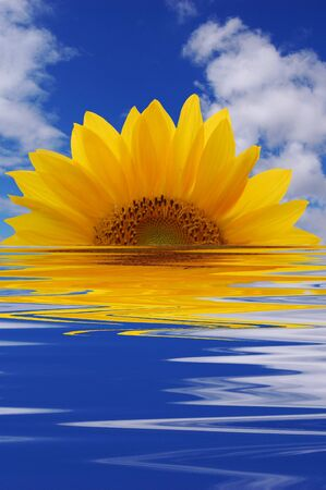 Sunflower that rises from the sea Stock Photo