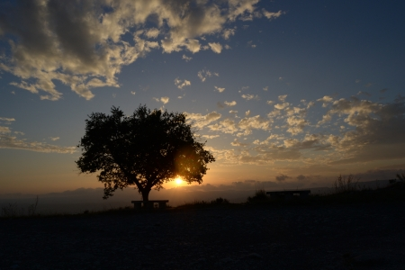 Tree at sunset - 1