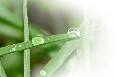 foglia: Gocce di acqua su fili di erba Stock Photo