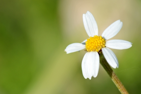 White daisy on a green background Stock Photo