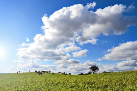 Landscape with green grass and clouds photo