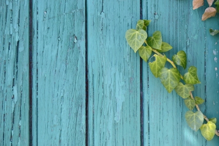 wooden frame with ivy leaves Stock Photo - 17597919