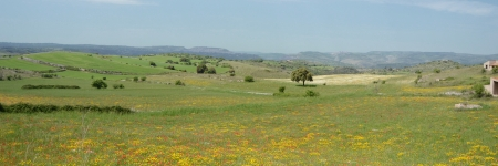 Landscape with flower meadow and tree - 3