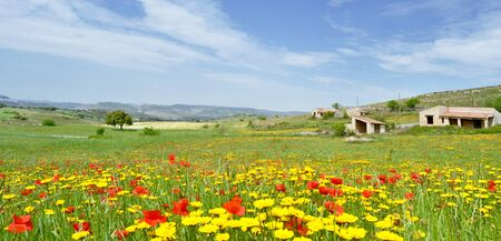 Landscape with yellow daisies and poppies with home dx