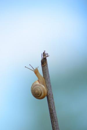 Snail on a stick with a blue background photo