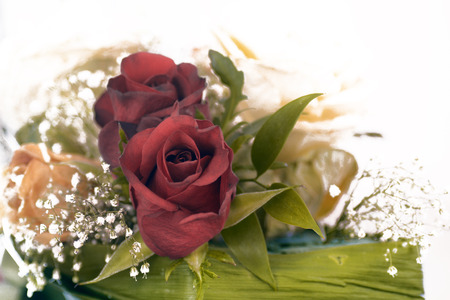 Vintage Red Rose photo
