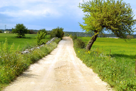 Country road with tree Stock Photo