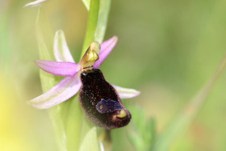 spontaneous: orchid spontaneous