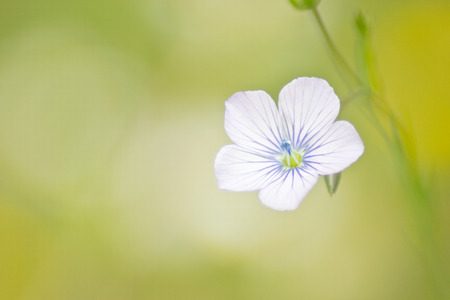 small wild flower Stock Photo