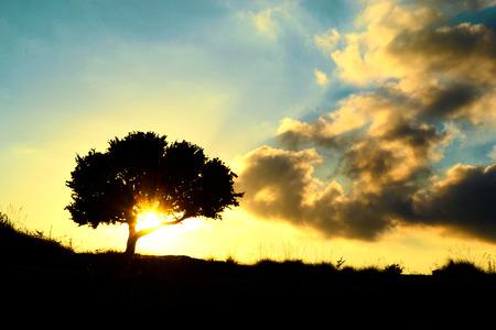 Crimson Sunset with oak tree Stock Photo