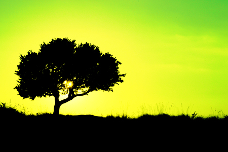 Silhouette of a tree with yellow and green background - ecology photo