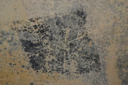 microbial: Mold in the wall