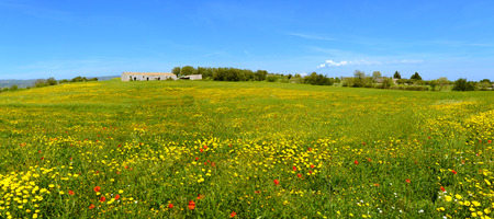 Panorama with flowery meadow with house and trees