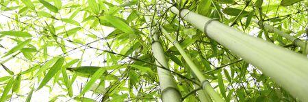 Template bamboo - zen concept