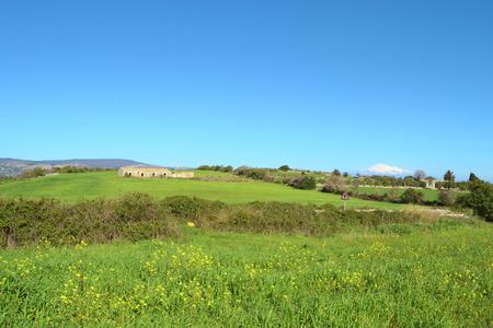 collina: Collina verde con fiori gialli un casolare e il cielo azzurro