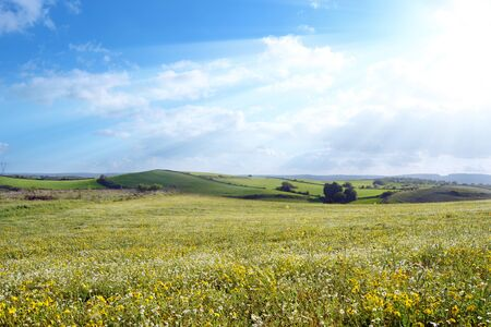 Panorama with flowery meadow green hills and sun rays in the sky