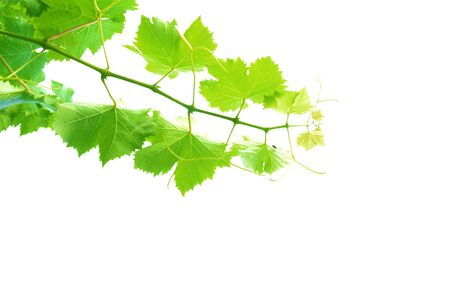 leaves isolated on a white background Stock Photo