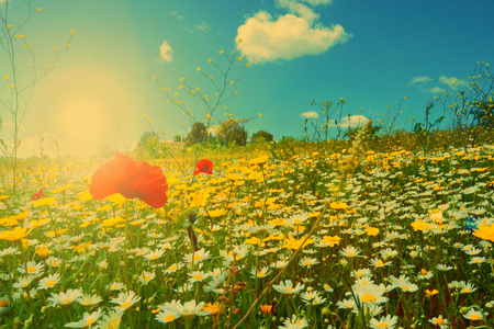 Spring with a beautiful meadow full of daisies Stock Photo