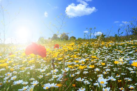 Fleurs sauvages au printemps