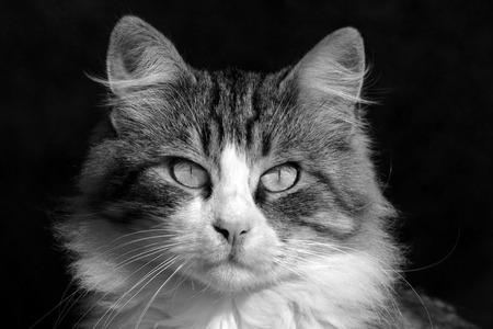 Close up of a beautiful cat