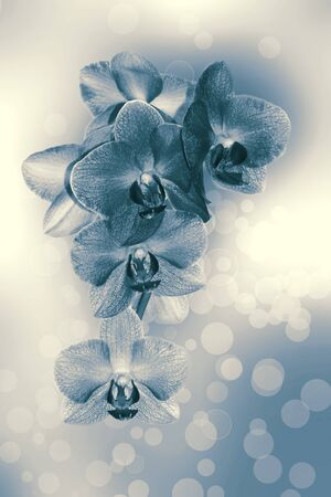 Monochromatic orchid on a beautiful background with the balls of light