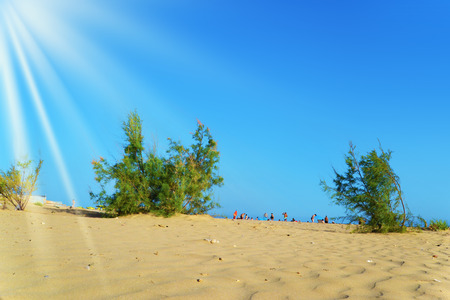 Sand with small trees and with the sea that is visible from afar