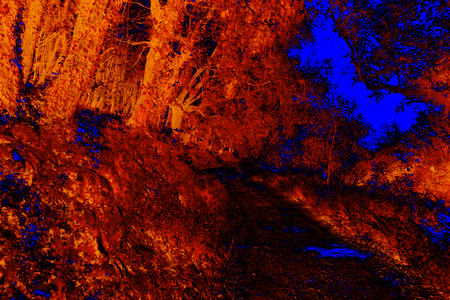red and blue infrared forest with road Imagens - 120763016