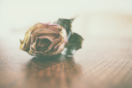 Beautiful withered rose resting on a wooden surface