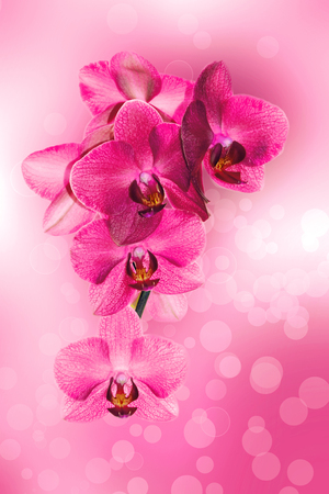 Background with monochrome orchids on a beautiful background