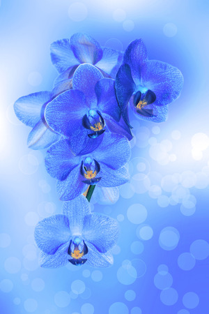 Background with monochrome orchids on a beautiful background Imagens