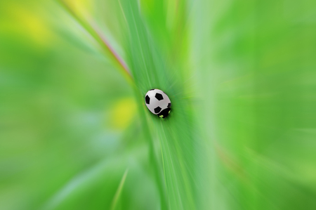 Ladybug on a blade of grass Archivio Fotografico - 122716263