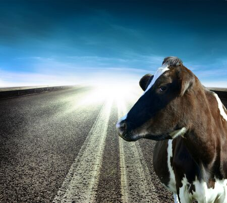 cow standing by the roadside Stock Photo