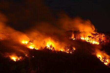 Disastro ambientale, incendio boschivo