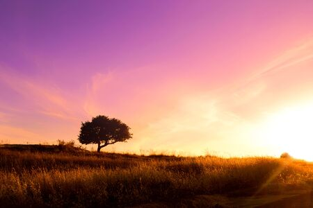 Purple and yellow sunset with silhouette of a tree Zdjęcie Seryjne