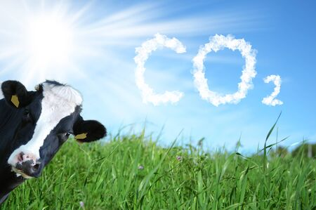 Cows breeding and CO2 emission Фото со стока