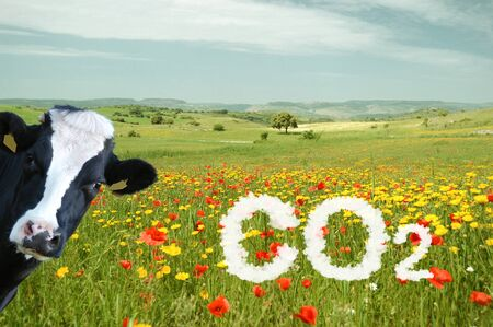 CO2 grassland with sky clouded by pollution and a watching cow