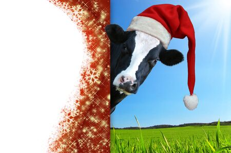 Christmas greeting card with cow