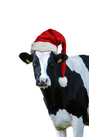 Christmas greeting card with cow on a white background