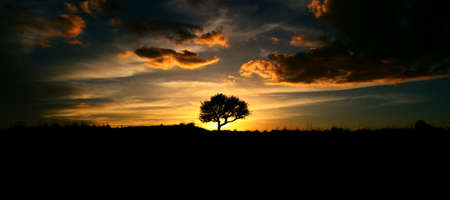 silhouette of an oak tree at sunset