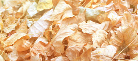 Texture of dry brown leaves in autumn