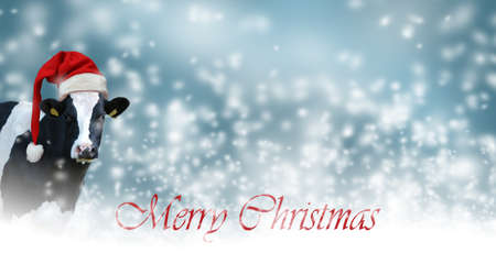 Merry Christmas with snow and Cow.Christmas greeting card with cow on a white background Archivio Fotografico - 159242003